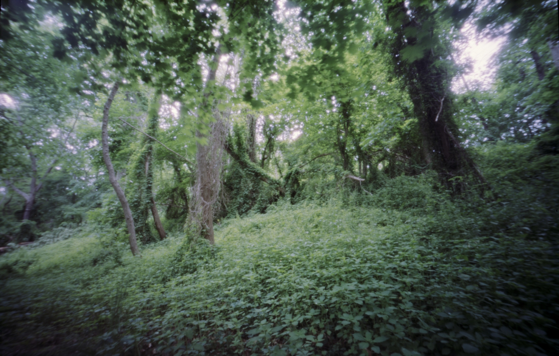 Endean Trail. Norwood. Ondu 6x9 pinhole.