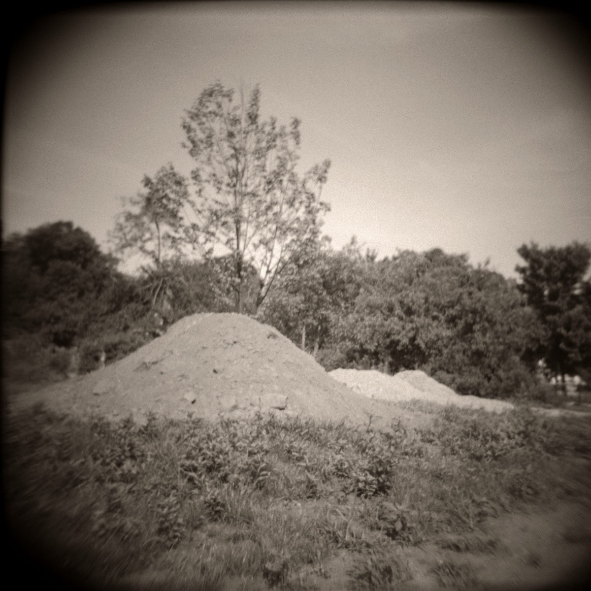 Dirt Pile and Tree.